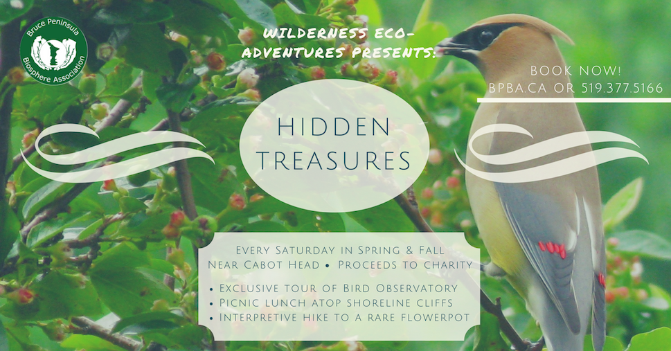 Hidden Treasures Ad Final